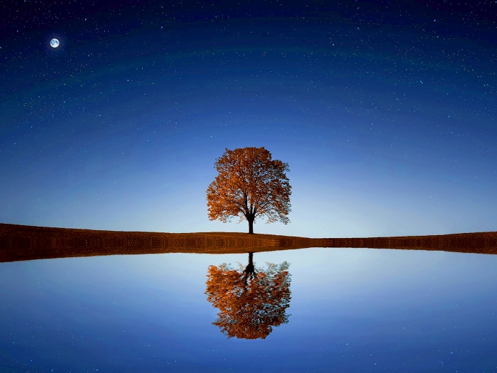 lonely-tree-peaceful-landscape-12939